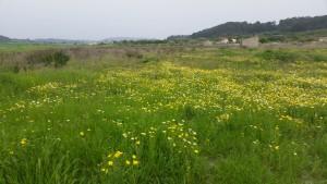 Bloemenweides Mallorca